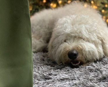 Dog on Cozy Carpet in Holidays